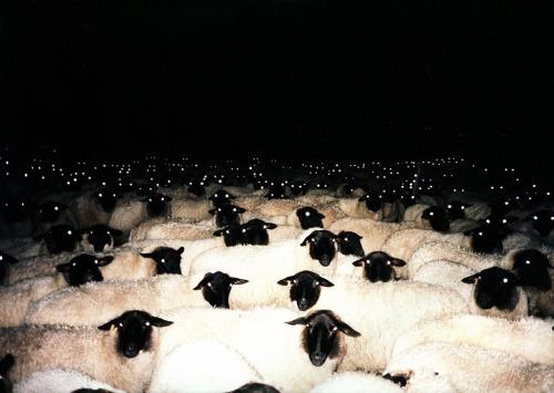Vous ne compterez plus les moutons de la meme manière