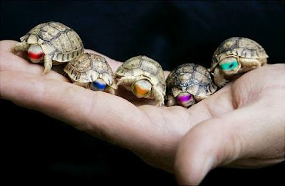 Oh … Ninja Turtles..