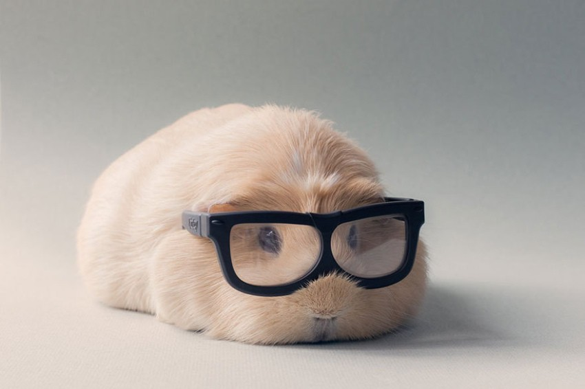 animaux a lunettes-04